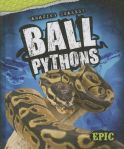 Ball Pythons